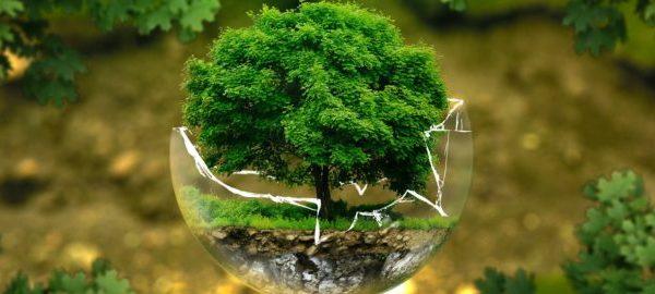 environmental-protection-326923_1920-e1524509034277-604x270